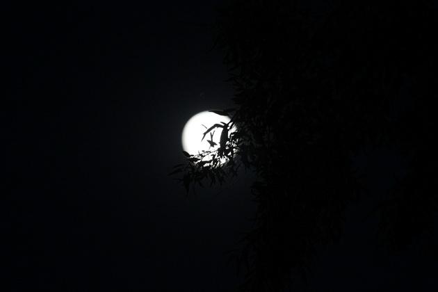 fotoreportaj cum s a vazut superluna la constanta 460733