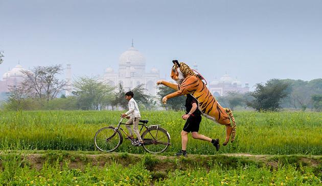 Paul Goldstein, maraton, tigri asiatici