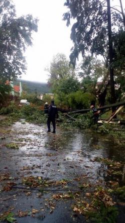 Bilanțul furtunilor din această seară. Mai mulți copaci au căzut. Un bărbat a murit în București