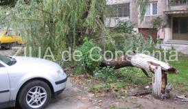 Bărbat decedat în București după ce un copac s-a prăbușit din cauza furtunii