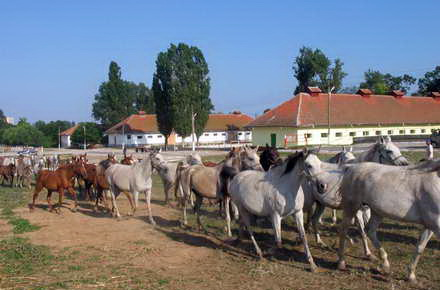 turisti_-_Herghelia_Mangalia30.jpg