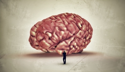 creier.jpg