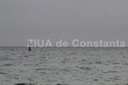 """Black Sea Oil & Gas SRL, demersuri către APM Constanţa  Sonda de explorare-deschidere pentru gaze naturale """"Ovidiana-1"""", în Poligonul 2 din perimetrul petrolier EX-25 """"Luceafărul"""""""