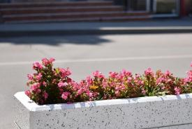 Firma avea datorii la stat în 2017 Cine reabilitează jardinierele amplasate pe domeniul public al municipiului Constanța? (document)