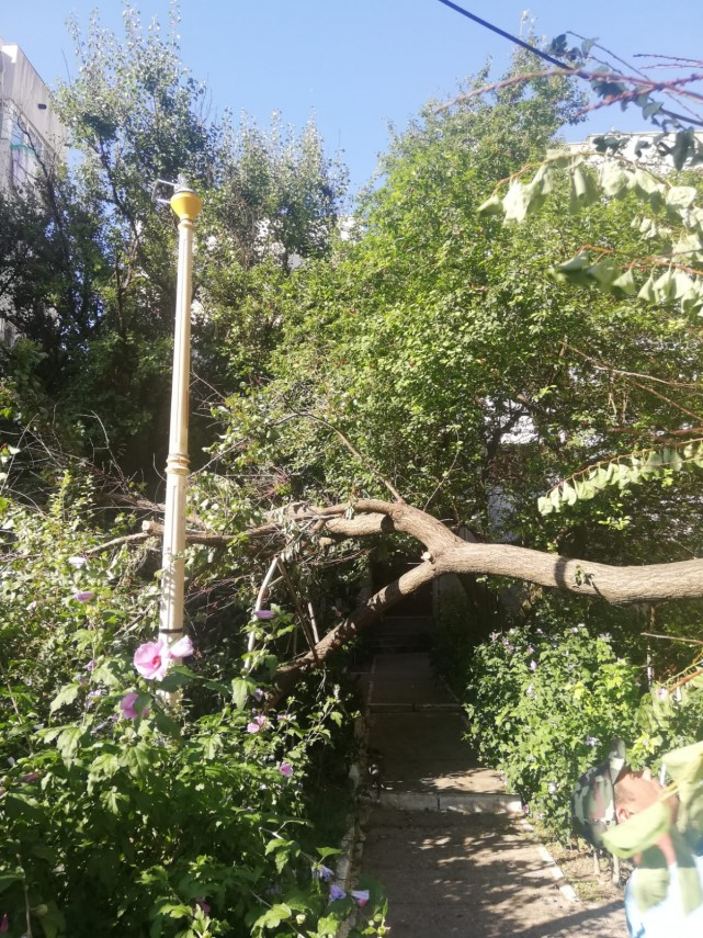 copacii cazuti in urma furtunii de sambata continua sa fie indepartati de pe domeniul public 697616