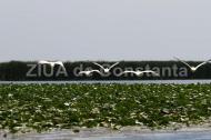 """Administraţia Rezervaţiei Biosferei """"Delta Dunării"""" primeşte peste 15.000 de hectare de teren în zona comunelor Mihai Viteazu şi Istria"""