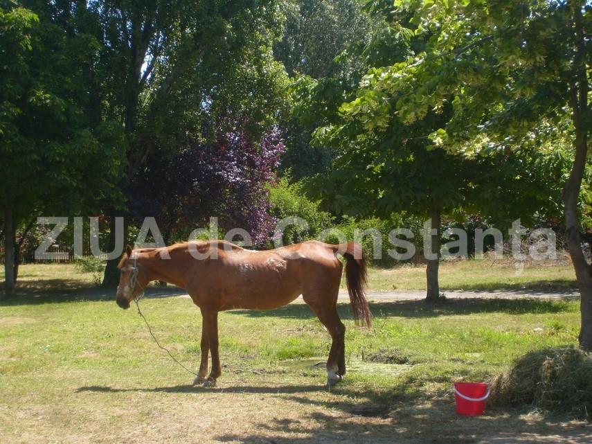 povestiri ecvestre caii politicienilor constanteni au trecut pe la complexul muzeal de stiinte ale naturii