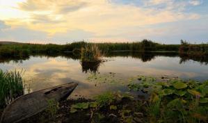 #Dobrogea Digitală: Războaiele din natură, nemiloase dar juste