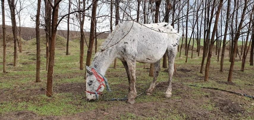 ce spune primarul orasului mai multi cai legati si slab hraniti filmati pe marginea lacului zarguzon